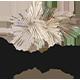 Pamplex - Trockenblumen und Dekoartikel